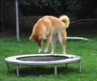 dogpounce
