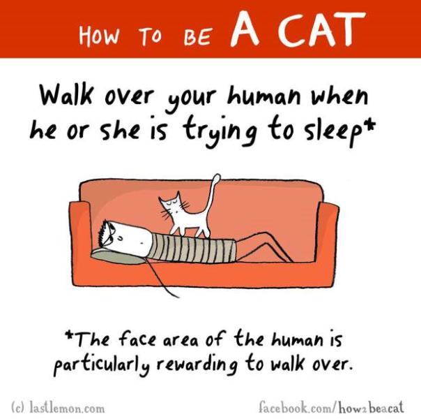 annoy cat