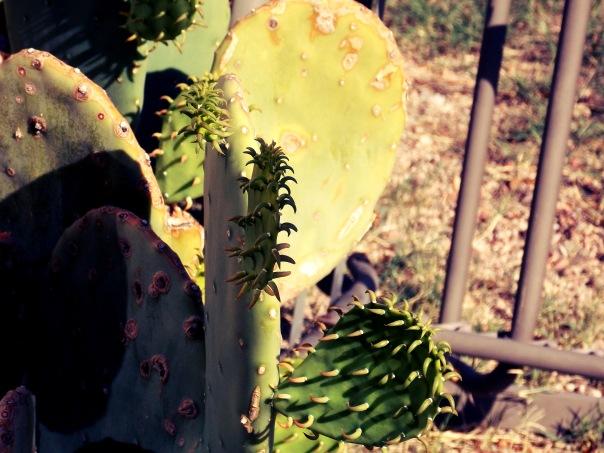 Gorgeous Cacti