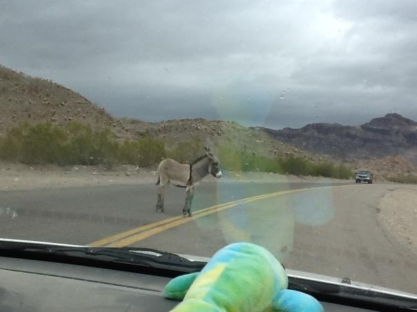 nic-burro