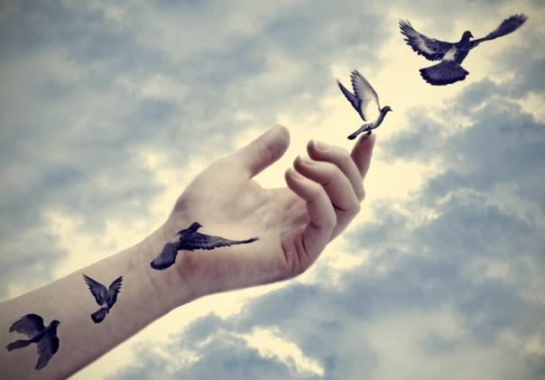birds-leave